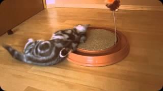 Catit Play and Scratch Інтерактивна іграшка з дражнилкою і когтеточку