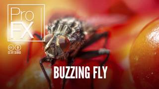 Buzzing Fly | Animal sound effects | ProFX (Sound, Sound Effects, Free Sound Effects)
