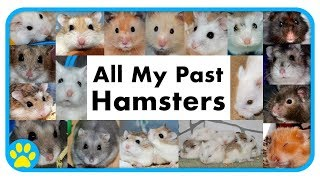 Past Hamsters, Best Bits & Emotional Moments | 7 Years On YouTube