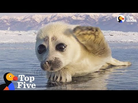 Seal Pup Waves To Photographer + Other Amazing Animal Encoun
