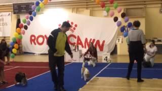 01.03.2015 Саранск, Всероссийская выставка собак