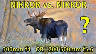 NIKKOR vs. NIKKOR: Which Nikon telephoto to buy, the 300mm f4 AF-S or 200-500mm f5.6?