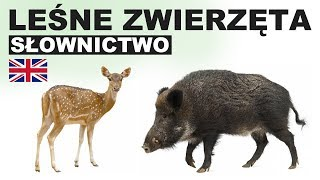 Learn Polish Vocabulary - Forest animals 2 (Zwierzęta leśne)