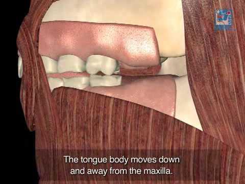Reverse swallow