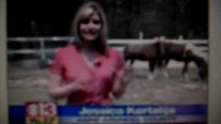 Pit bull attacks horse in Maryland