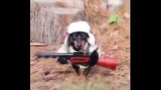 прикольные костюмчики для собак