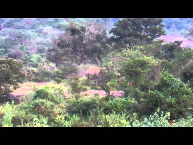 Wild Elephant at Anamalai