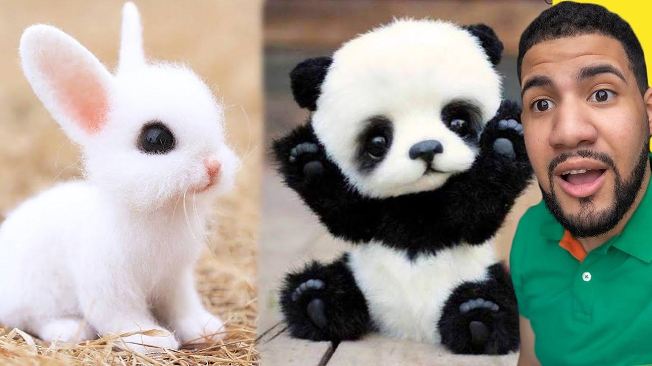 Estos Son Los Animales Más Tiernos Del Mundo 😍 #2