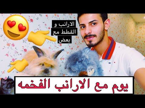 الارانب والقطط مع بعض ايش صار 🤔 ؟ و معلومات عن تربية وتغذية الارانب 🐰/ Mohamed Vlog