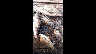 Рыбалка в Ивонченцах на поплавочку: карась, окунь, амур.