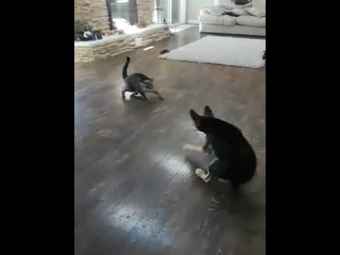 Funny Pets, Dog Gets Cornered by 2 Cats..