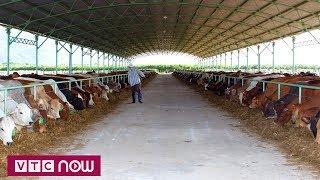 Việt Nam sản xuất thành công vacxin chống lở mồm long móng