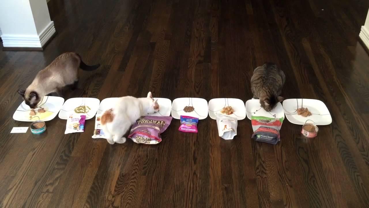 Which Cat Food is Tastier? A Feline Taste Test. - YouTube