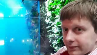 видео Первая продажа кругосветного круиза MSC в России