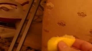 Как  отучить кота  или кошку  портить мебель.