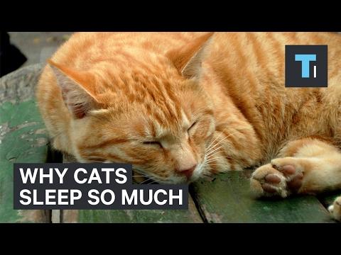grumpy cat vs.nyan cat