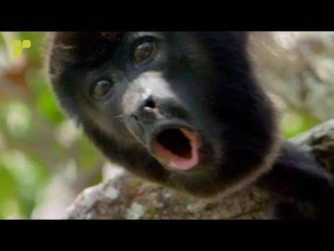 Union Jack - Gibbon  [Platipus]  *Official Video*