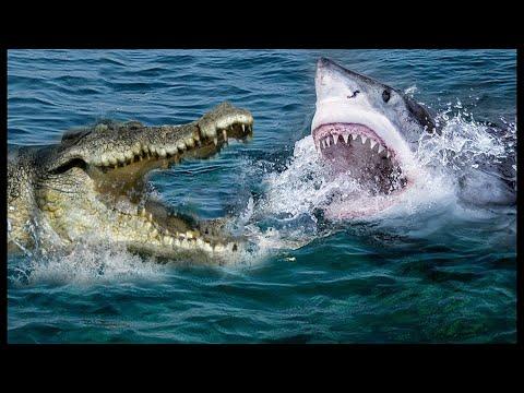 Версус! На что способен Крокодил против слона, Тигра и даже акулы!
