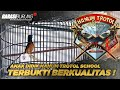 Jebolan Markas Hanum Trotol School Terbukti Berkualitas Ring Hanum Bf   Mp3 - Mp4 Download