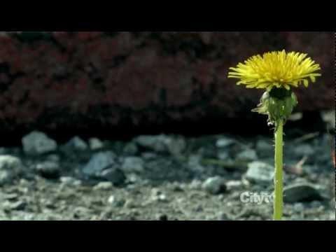 Fringe season 5 - (Yazoo only you) Walter - HD