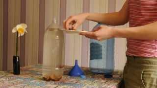 Как приготовить березовый квас Як приготувати березовий квас