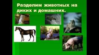 Домашние и дикие животные