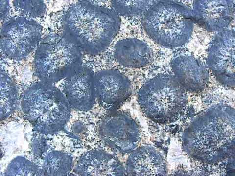 Orbicular Rocks Granito Orbicular Caldera Atacama Chile