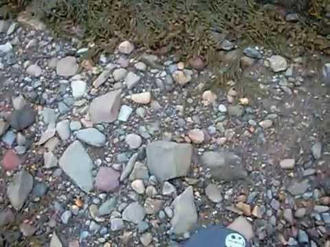 GOLD ! Prospecting N.B Canada,tincan beach metal detector  2013 S01 ep03
