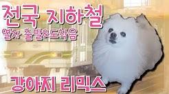 [강아지 리믹스] 전국 지하철 진입음 & 출발음 (교통합성?)