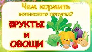 Чем кормить волнистого попугая? Фрукты и овощи #Волнистый #попугай #советы по уходу и содержанию