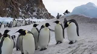 36 й клип Флудилка групп  Заврелена и Антарктида