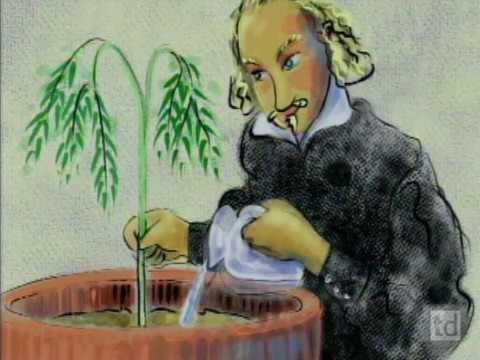 NOVA Photosynthesis Science Video PBS LearningMedia