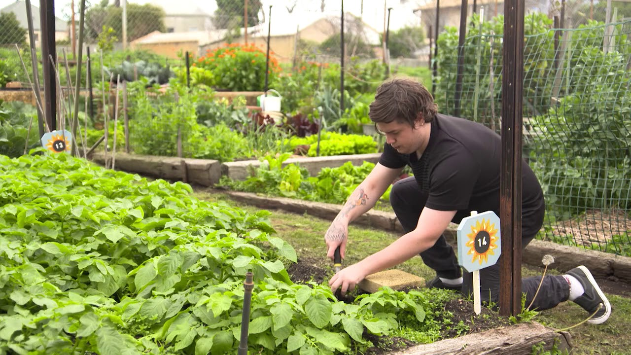 speech on growing your own vegetable garden