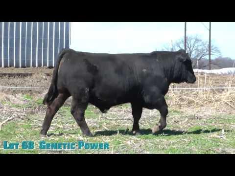 Lot 68  Genetic Power