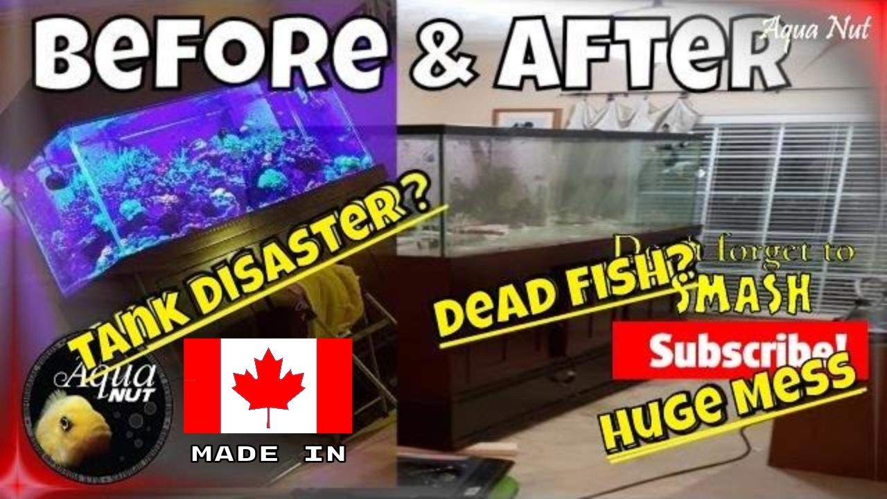 Fish Room Disasters Aquarium Exploded Preventing Heater Failures