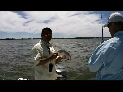 White bass and Wipers at Marion Reservoir