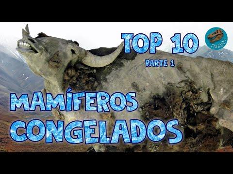 Top 10: Mamferos congelados (parte 1)
