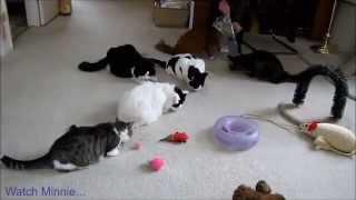 Очень смешные кошки 2013