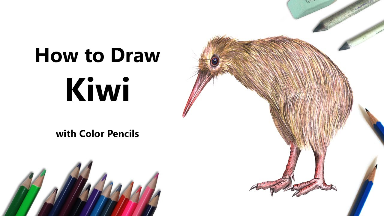 How To Draw A Kiwi With Color Pencils Time Lapse Youtube