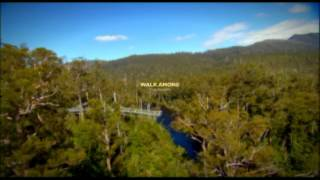 Tahune Airwalk, Attraction In Huon Valley, Near Hobart