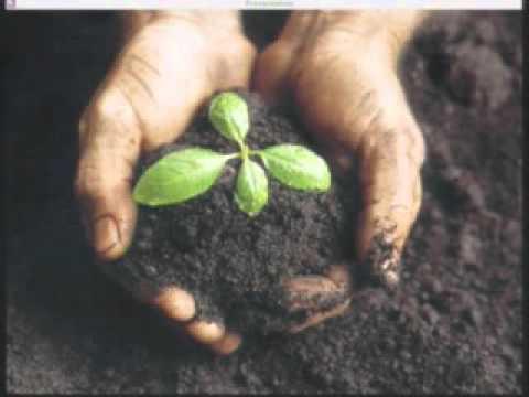 20141123 - Seed Germination