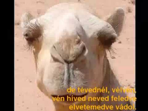 romhányi - a teve fohásza.wmv
