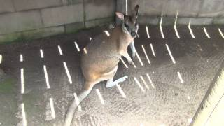 オーストラリアのキュランダにある「ワイルドライフパーク」という動物...