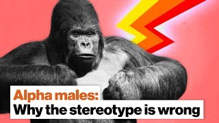 Why the 'alpha male' stereotype is wrong | Frans de Waal