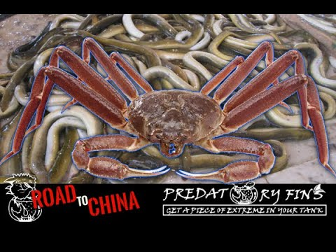 GIANT CRAB Found In Chinese FISH MARKET