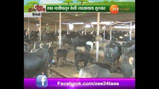 Peekpani | Hingoli | Buffalo Farm In Profit