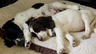 Meet The Puppies...
