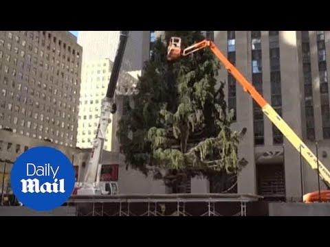 Christmas Tree Arrives Arrives At Rockefeller Center In NY