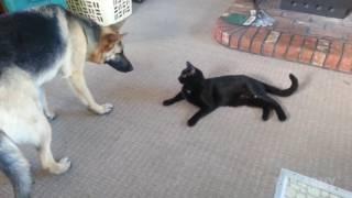 śmieszne psy 2