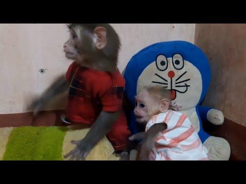 lusi lu - YouTube